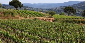Domaines Bunan - Les vignes