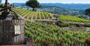 Domaines Bunan - Un pressoir devant la vigne