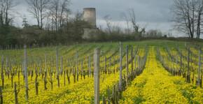 Château de l'Hurbe - Le vignoble
