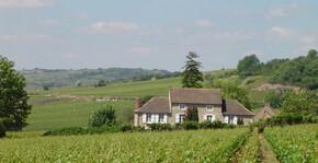 Domaine Hervé de Lavoreille - Le vignoble et la maison