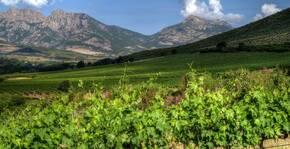 Domaine d'Alzipratu(Corse) : Visite & Dégustation Vin