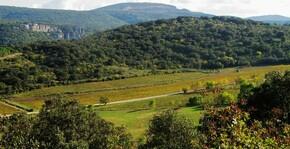 Domaine d'Anglas - Le vignoble