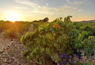 Maison Brotte - Les galets roulés du Sud de la Vallée du Rhône