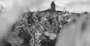 Domaine Baillais - Les vignes