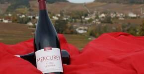 Domaine Jobard Bourland(Bourgogne) : Visite & Dégustation Vin