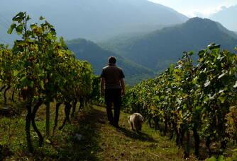 Christophe Martin dans les vignes
