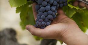Maison Brotte(Vallée du Rhône) : Visite & Dégustation Vin