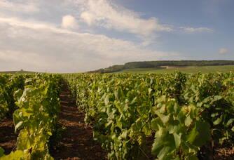 Au plus près de nos vignes