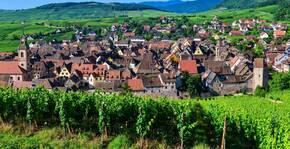Vignes Schoenenbourg Domaine Laurence et Philippe Greiner Vins Bio Alsace Riquewihr