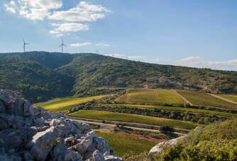 Vue panoramique sur le vignoble du Château de Lastours