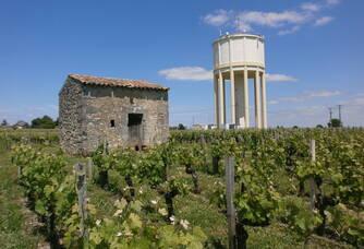 Dans les vignes du Château Saint-Vincent