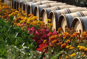 Le Domaine Labruyère en fleurs