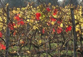 Les belles couleurs d'automne du Château Laurou