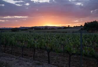 La nuit tombante sur le vignoble des Bormettes