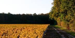 Vue du vignoble en automne au château de Fontenay