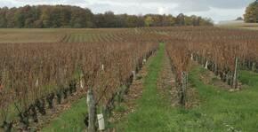 Le vignoble du Château Fontenay