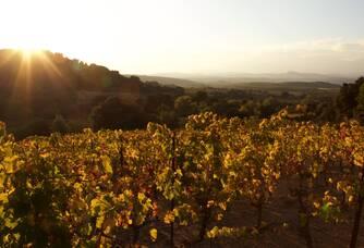 Une autre parcelle du vignoble du Château Haut-Blanville