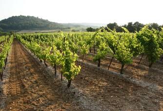 Superbe vue entre les vignes au Château Haut-Blanville