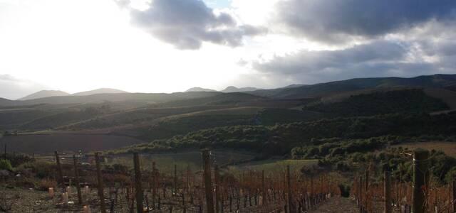 Domaine Cottebrune