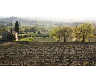 Le vignoble du Domaine de Verquière vu du dessus