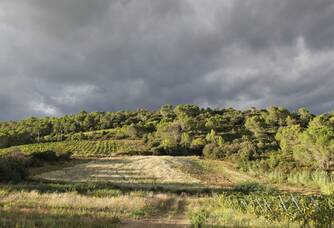Le vignoble du Domaine des Païssels