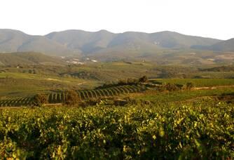 Vue large du vignoble Prés-Lasses