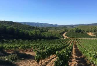 Superbe vue entre les vignes du Domaine Mandourelle