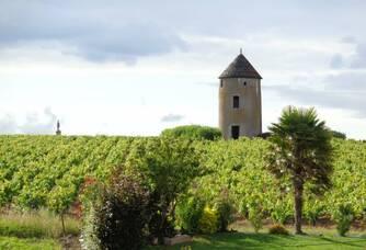 La vue du vignoble Ménard-Gaborit