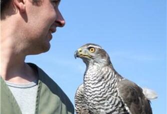 Nicolas Hirissou et son faucon pour veiller sur le Domaine du Moulin