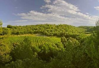 Une autre vue du vignoble de la Famille Guibert