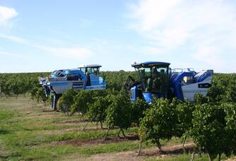 Les vendanges dans les Vignobles Garzaro