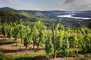 Région de la Vallée du Rhône